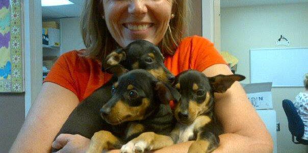 dogs   Catherine Mann